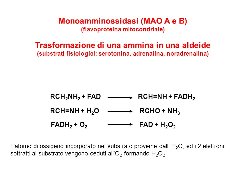 Monoamminossidasi (MAO A e B)