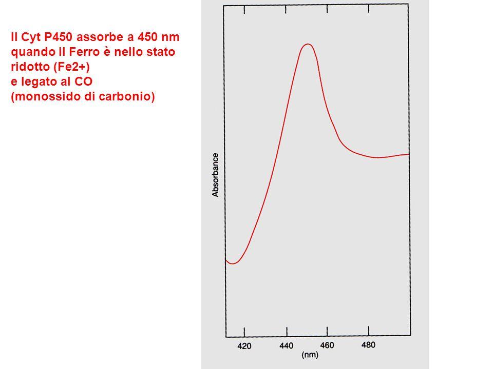 Il Cyt P450 assorbe a 450 nmquando il Ferro è nello stato.