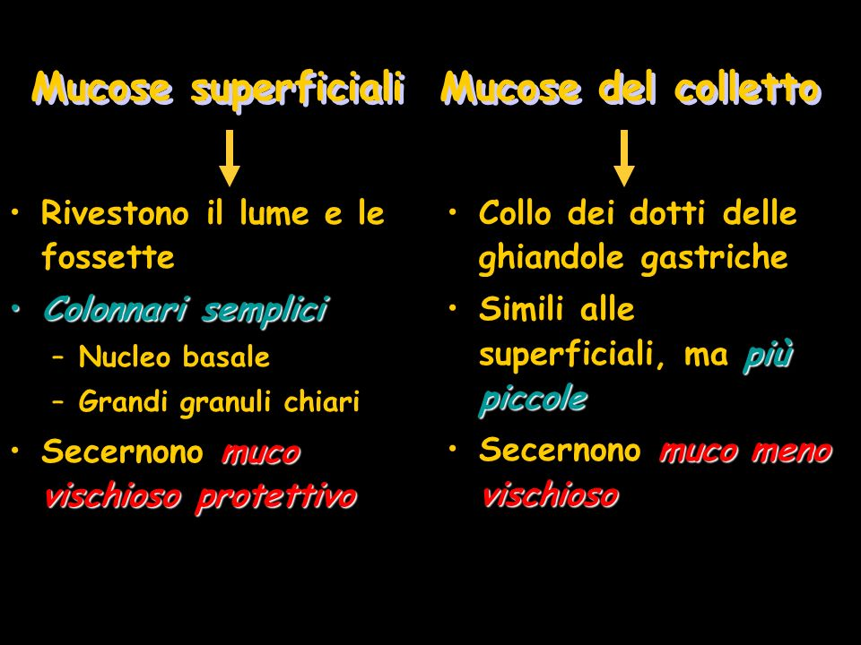 Mucose superficiali Mucose del colletto