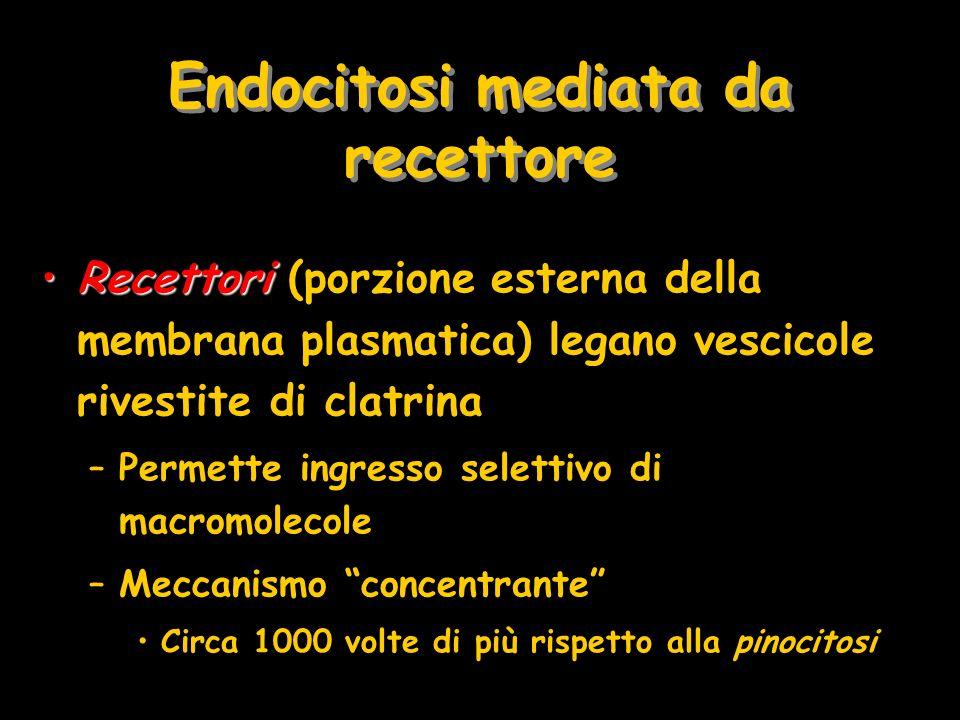 Endocitosi mediata da recettore