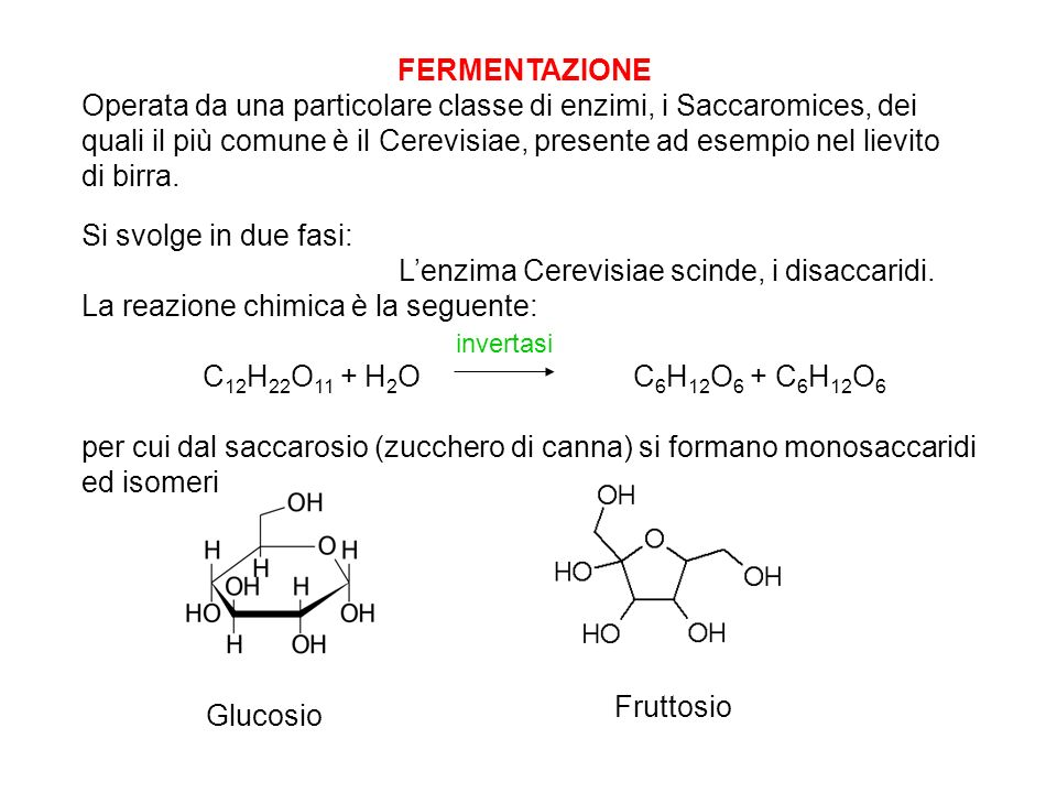 L'enzima Cerevisiae scinde, i disaccaridi.