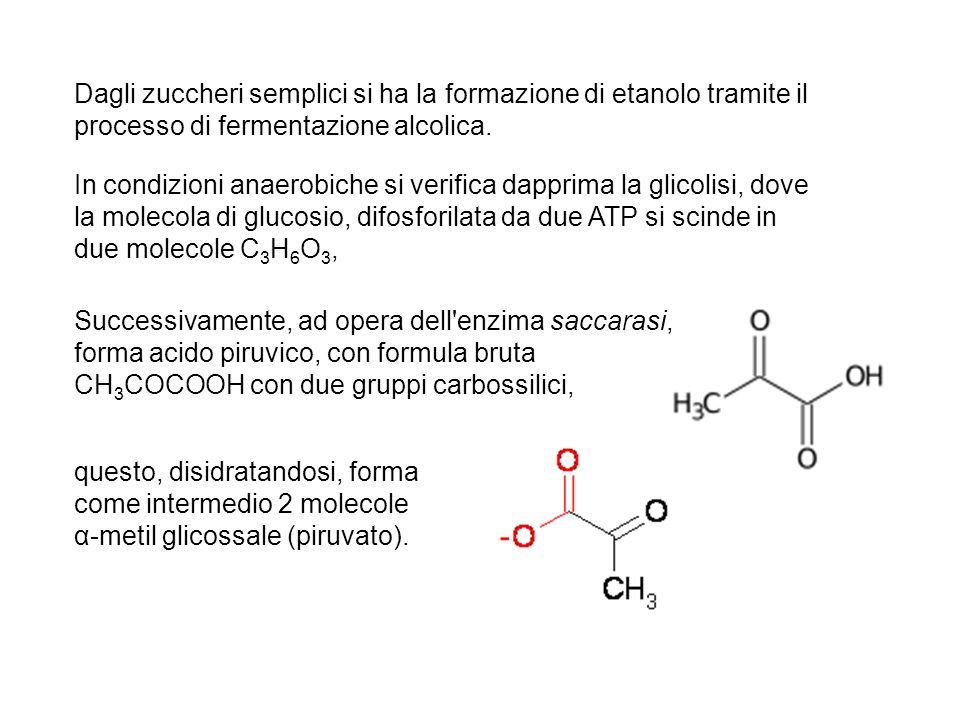 Dagli zuccheri semplici si ha la formazione di etanolo tramite il processo di fermentazione alcolica.