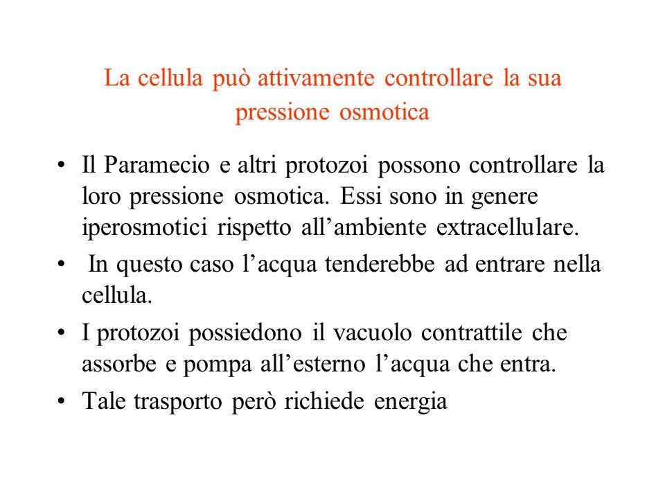 La cellula può attivamente controllare la sua pressione osmotica