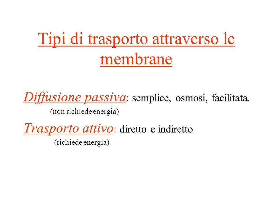 Tipi di trasporto attraverso le membrane