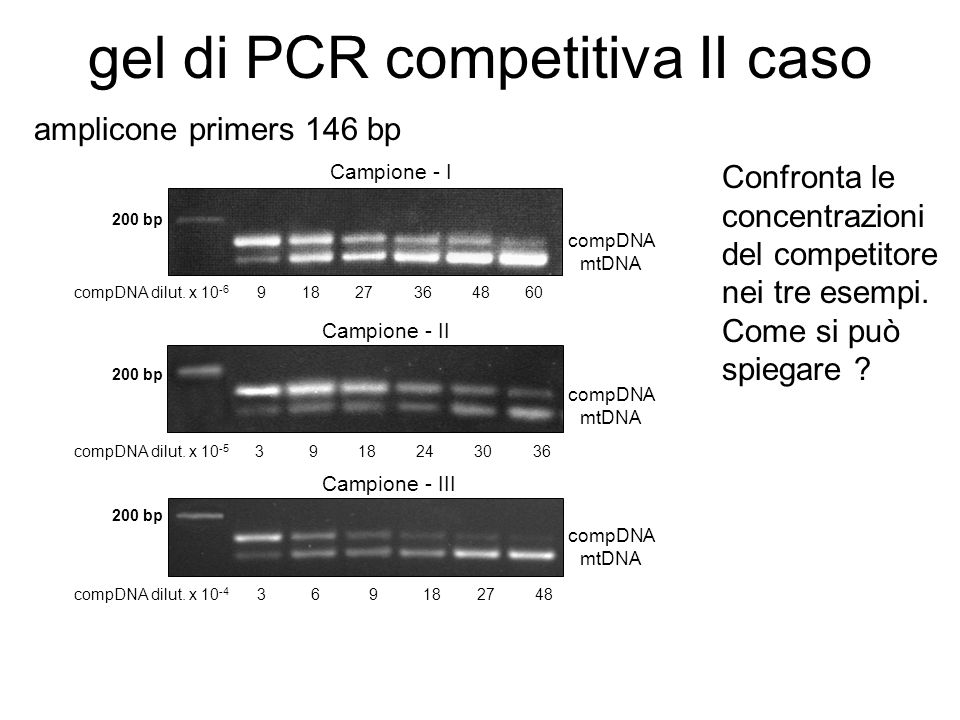 gel di PCR competitiva II caso