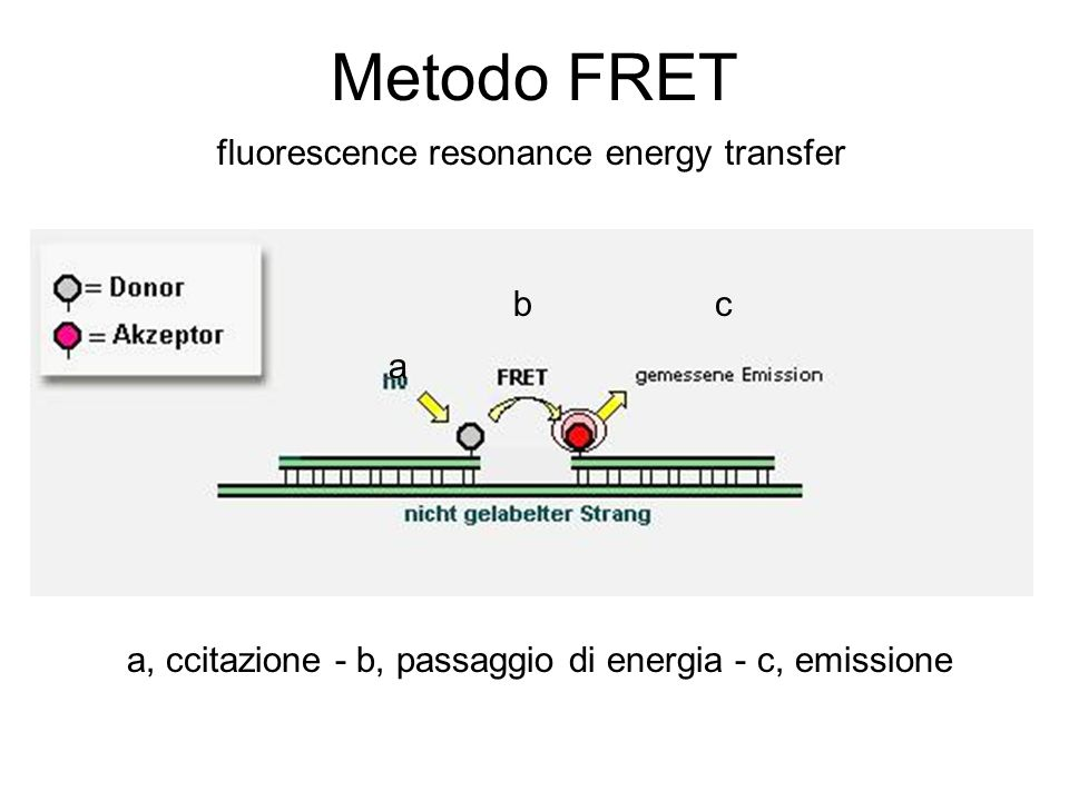 Metodo FRET fluorescence resonance energy transfer b c a