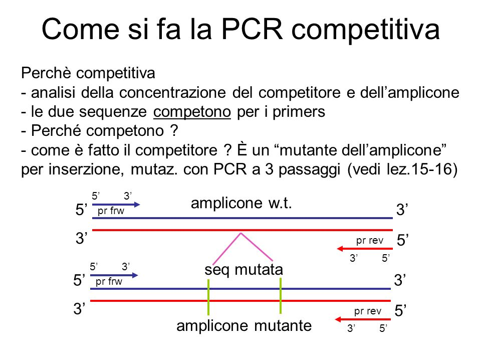 Come si fa la PCR competitiva