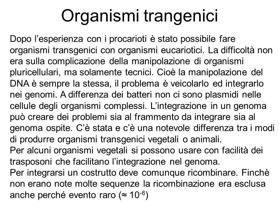 Organismi trangenici