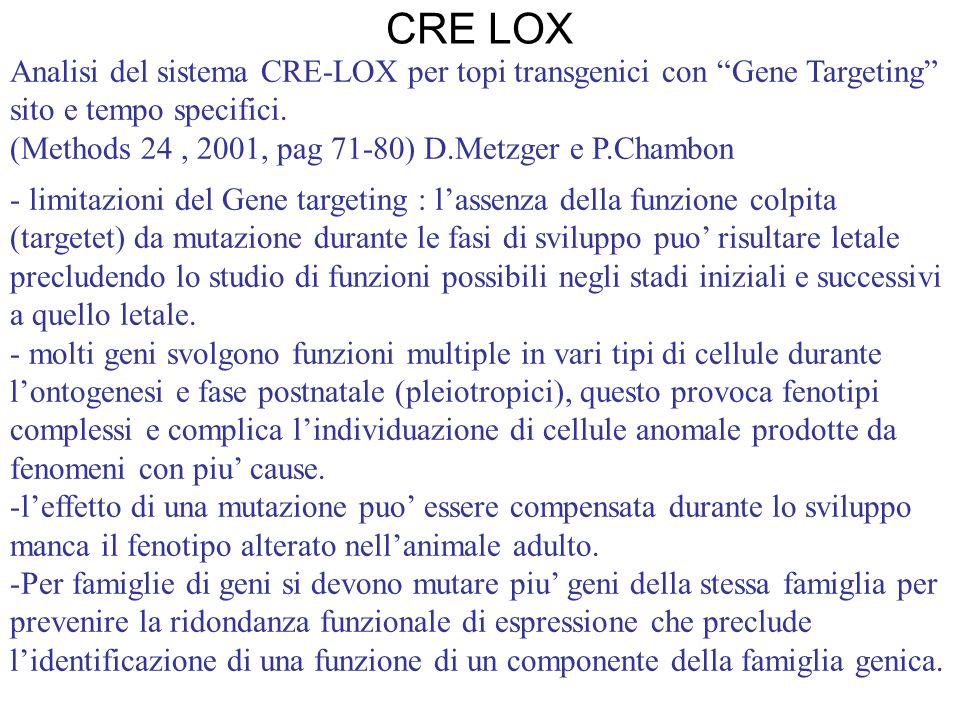 CRE LOX Analisi del sistema CRE-LOX per topi transgenici con Gene Targeting sito e tempo specifici.