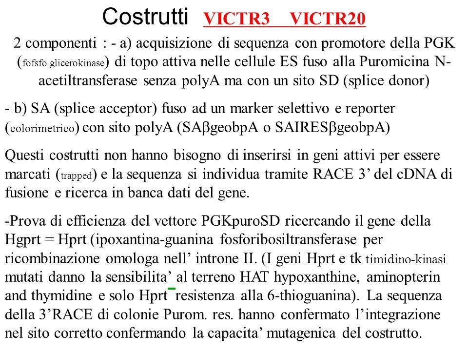 Costrutti VICTR3 VICTR20