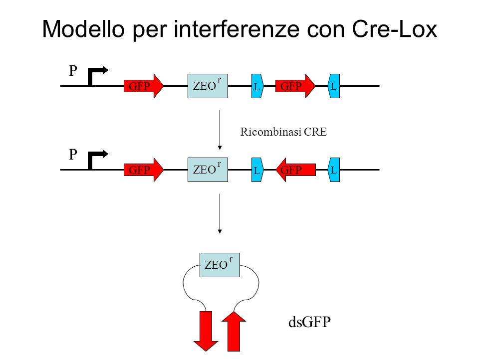 Modello per interferenze con Cre-Lox