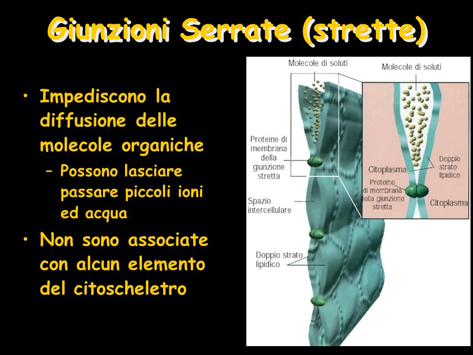 Giunzioni Serrate (strette)