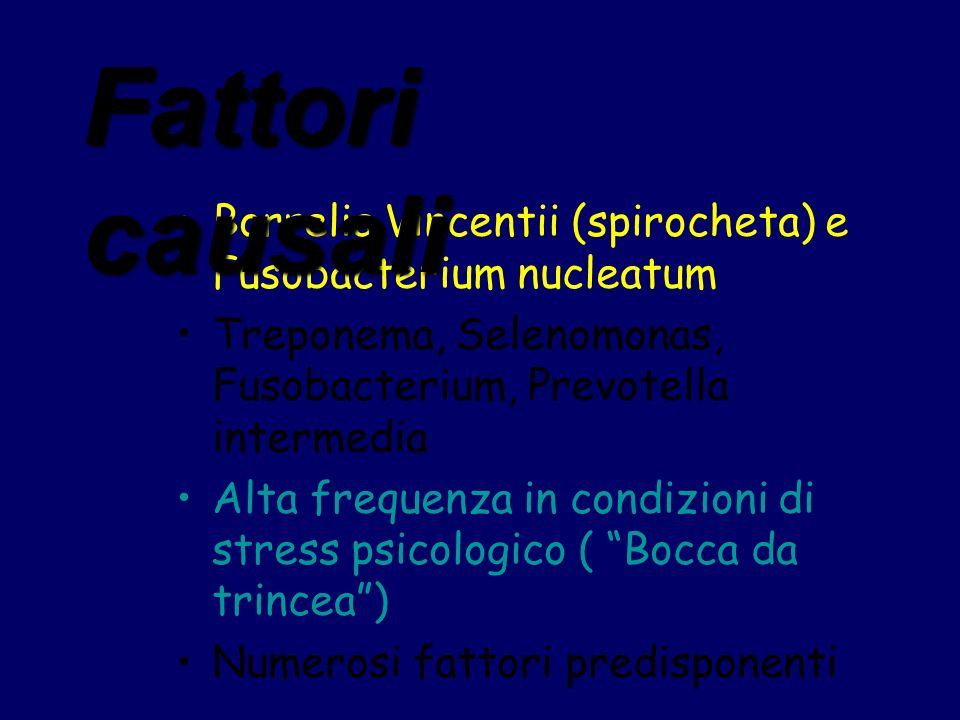 Fattori causali Borrelia Vincentii (spirocheta) e Fusobacterium nucleatum. Treponema, Selenomonas, Fusobacterium, Prevotella intermedia.