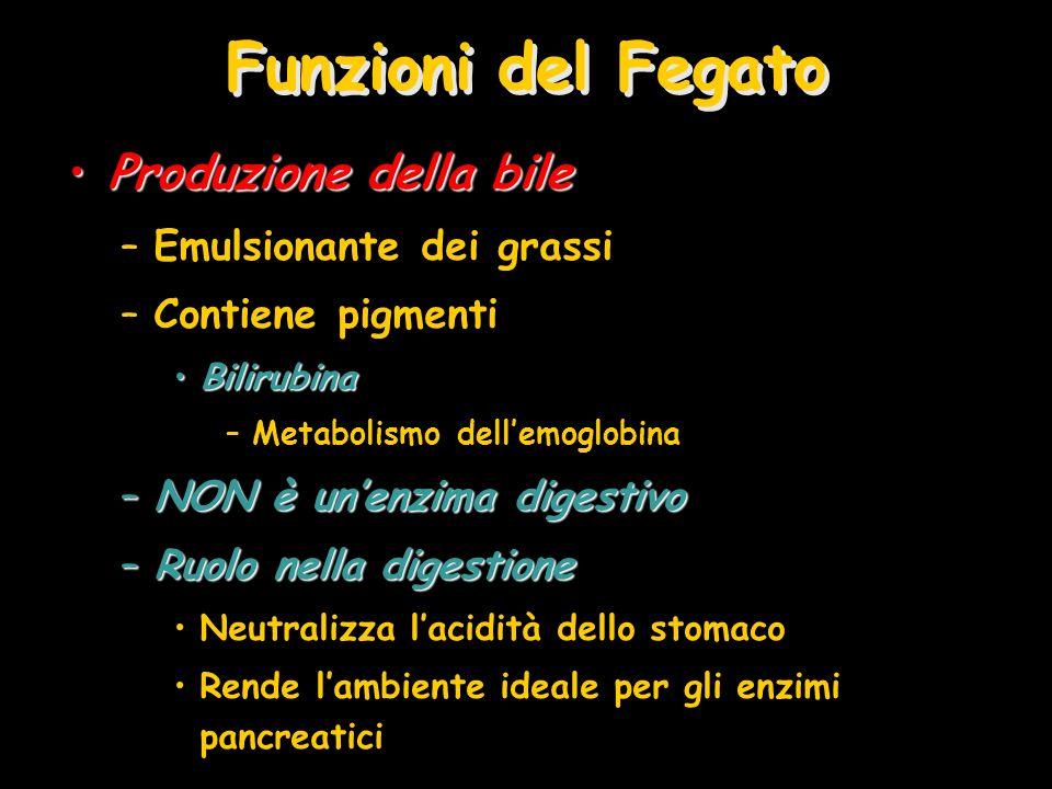 Funzioni del Fegato Produzione della bile Emulsionante dei grassi