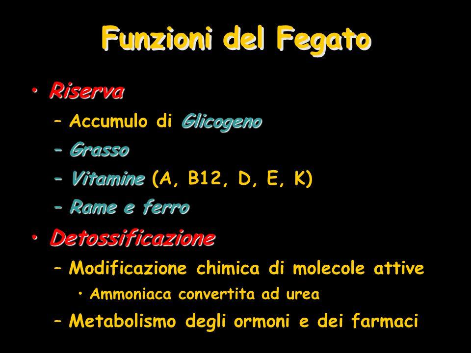 Funzioni del Fegato Riserva Detossificazione Accumulo di Glicogeno