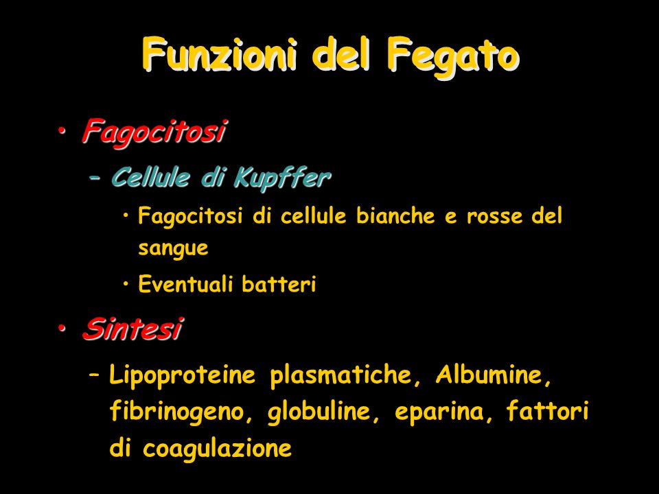 Funzioni del Fegato Fagocitosi Sintesi Cellule di Kupffer