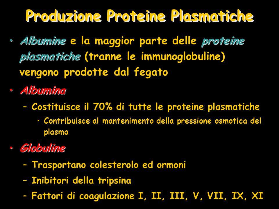 Produzione Proteine Plasmatiche