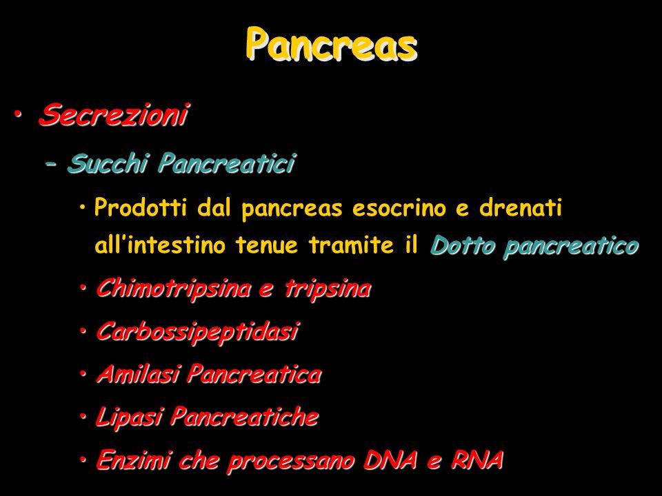 Pancreas Secrezioni Succhi Pancreatici