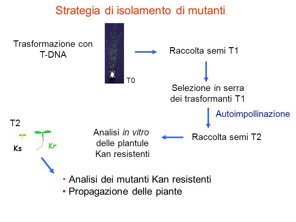 Trasformazione con T-DNA
