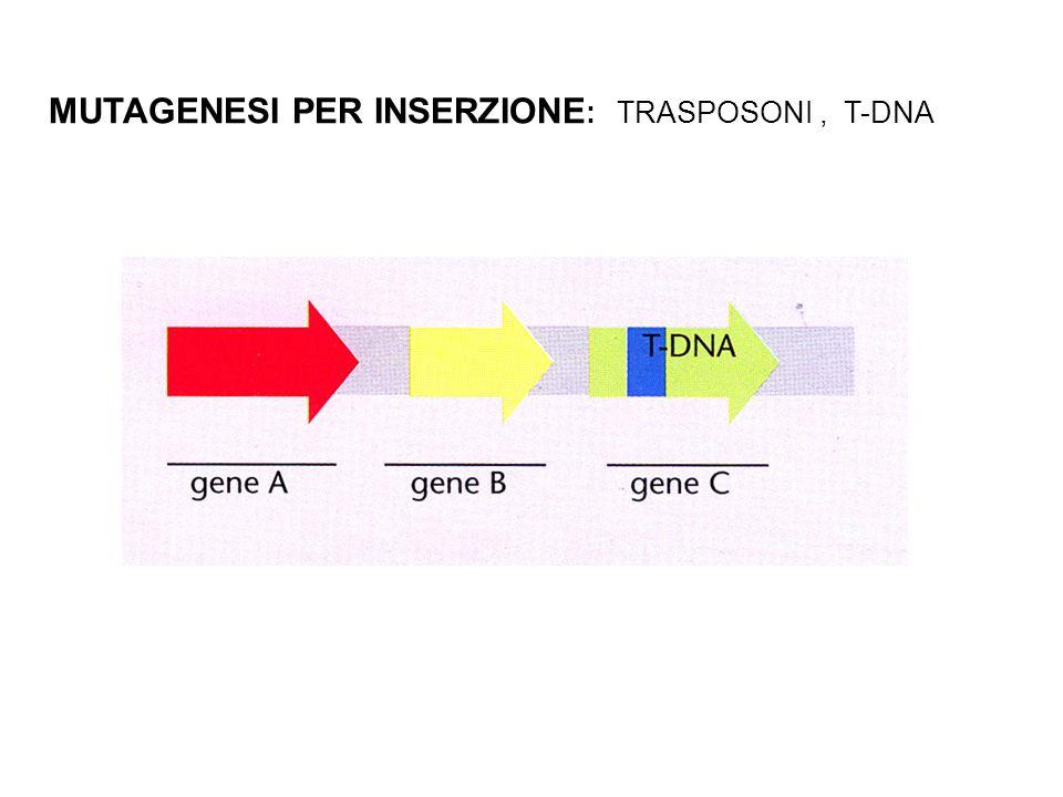 MUTAGENESI PER INSERZIONE: TRASPOSONI , T-DNA
