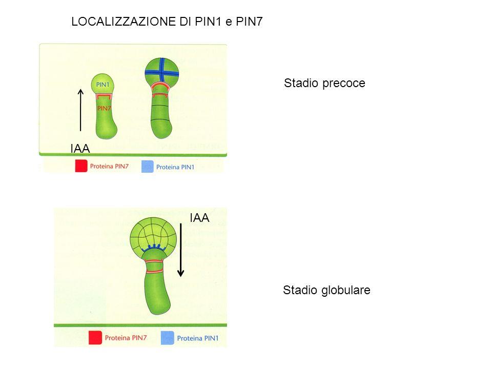 LOCALIZZAZIONE DI PIN1 e PIN7