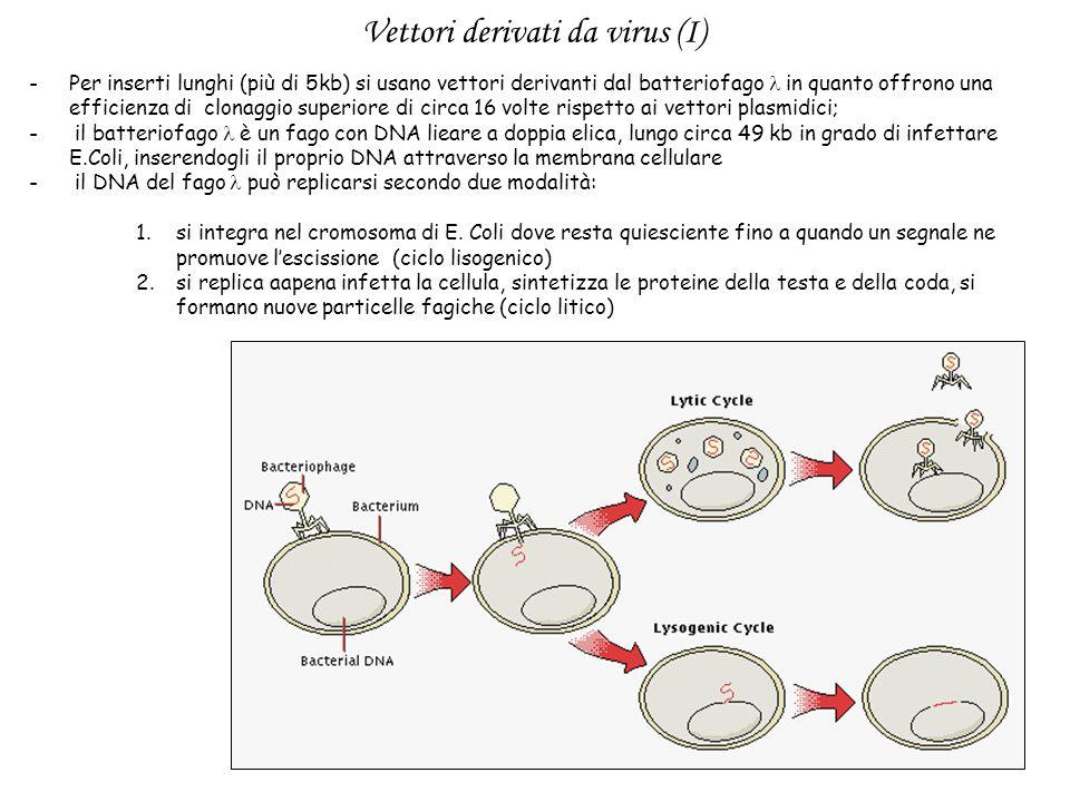 Vettori derivati da virus (I)