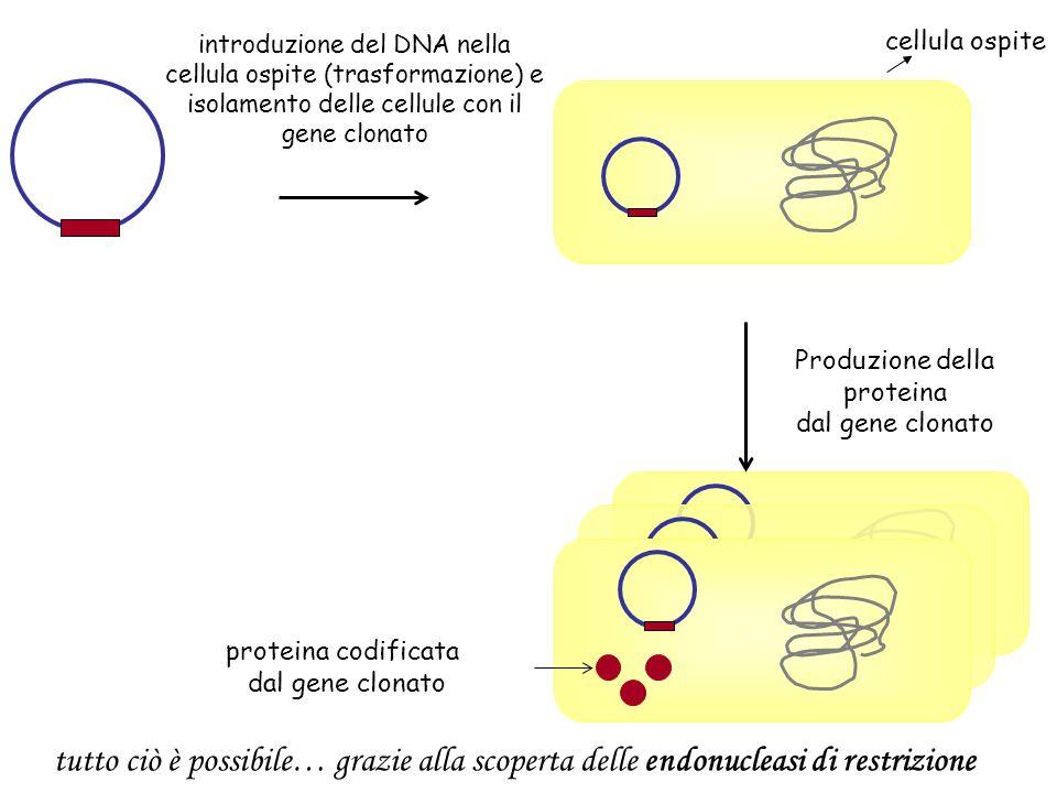 introduzione del DNA nella