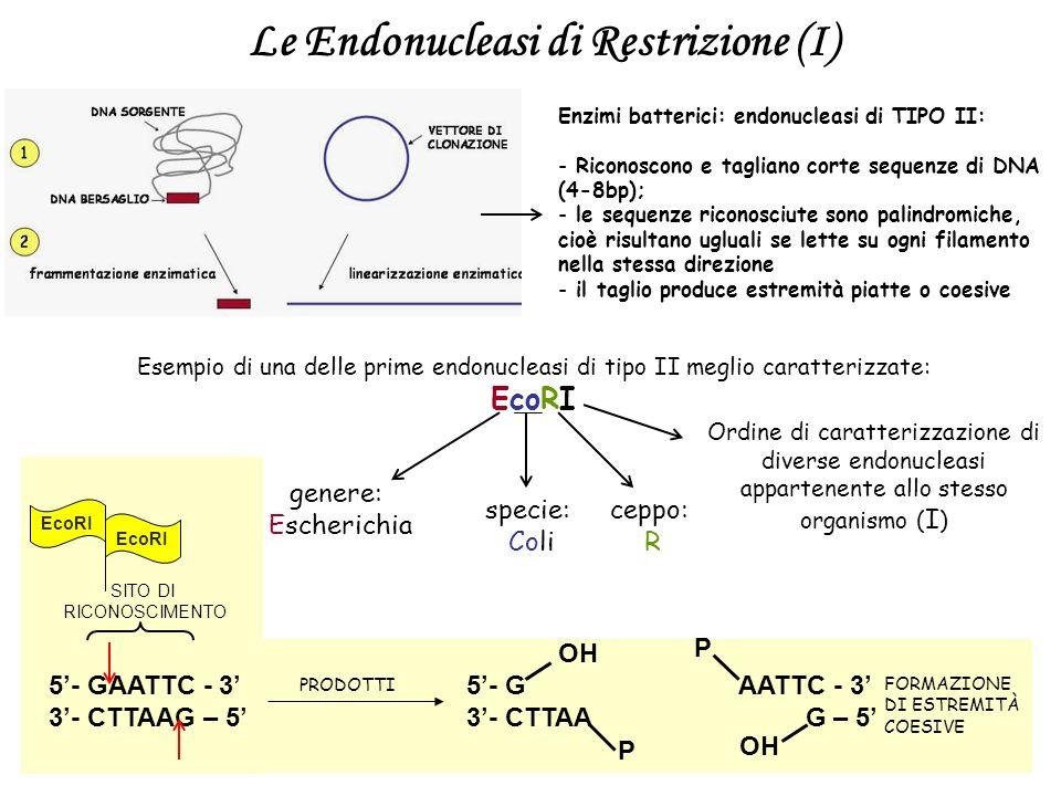Le Endonucleasi di Restrizione (I)