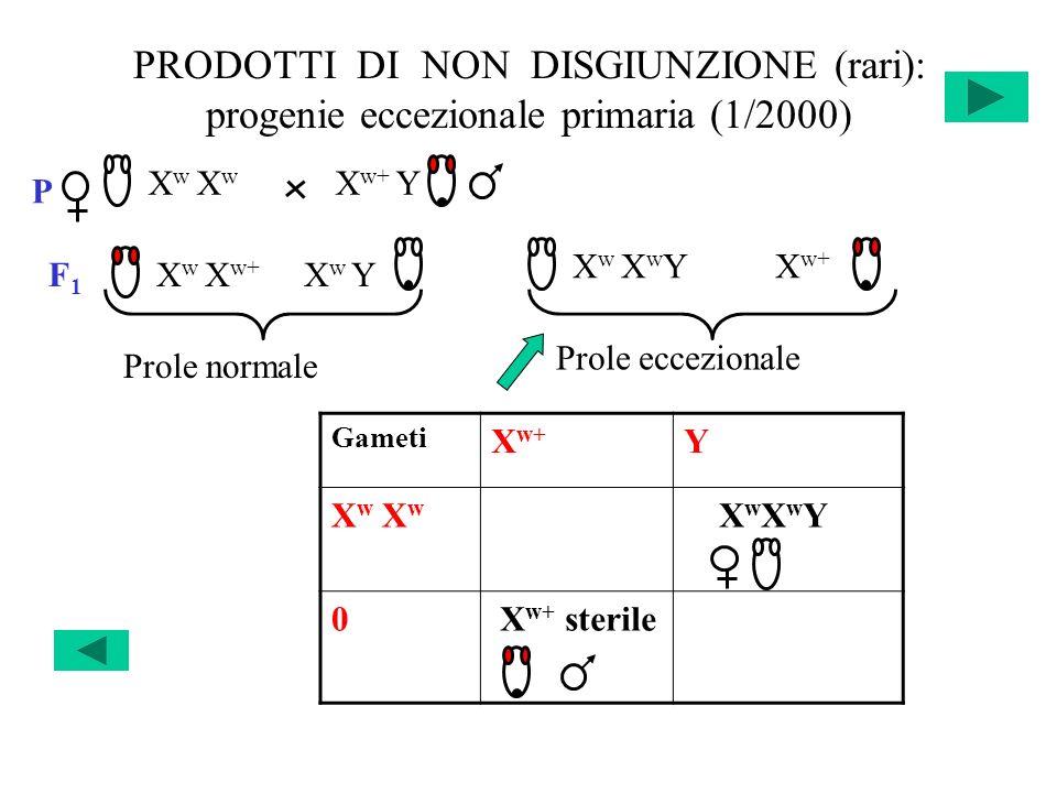 PRODOTTI DI NON DISGIUNZIONE (rari): progenie eccezionale primaria (1/2000)