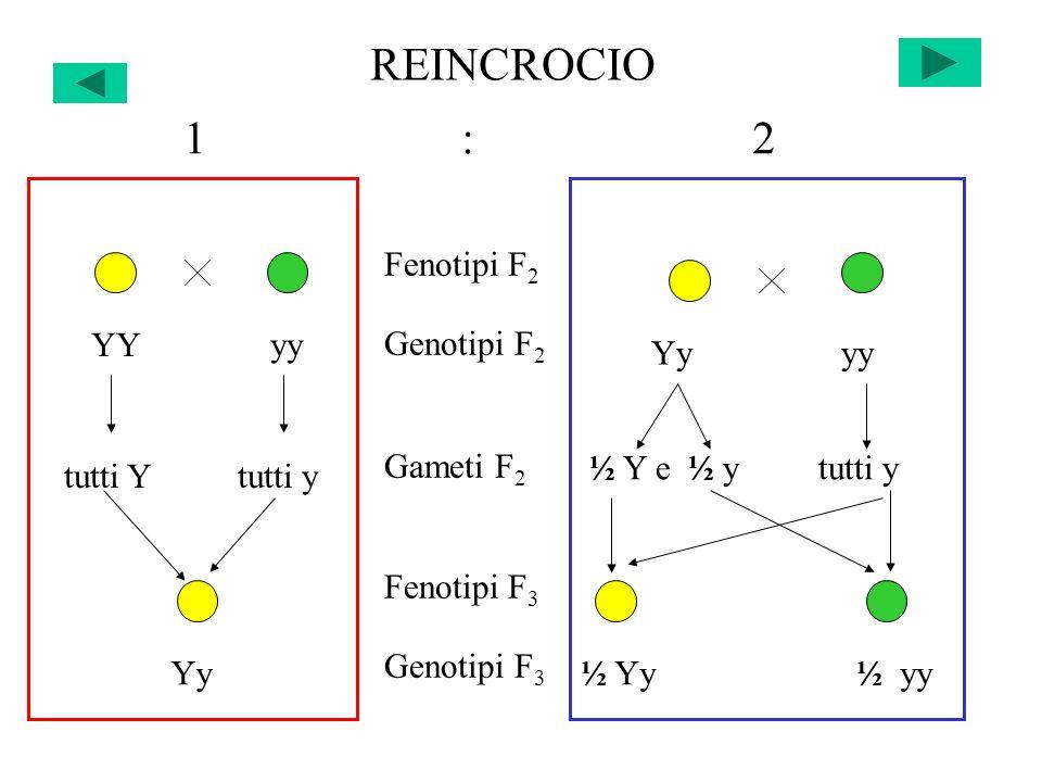 REINCROCIO 1 : 2 Fenotipi F2 Genotipi F2 Gameti F2 Fenotipi F3