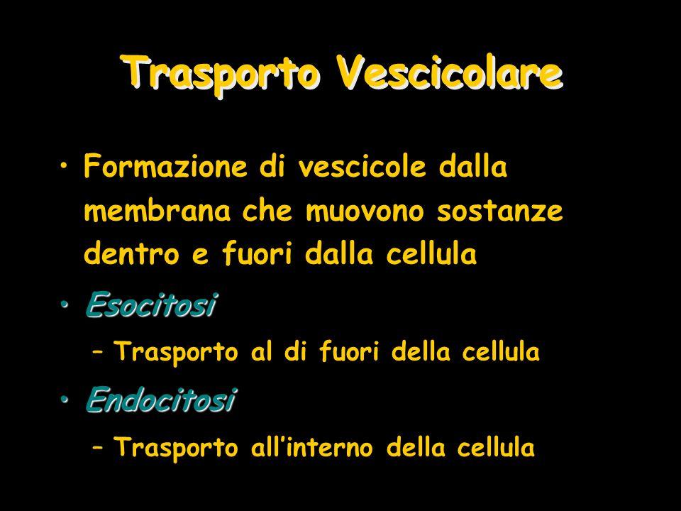 Trasporto Vescicolare