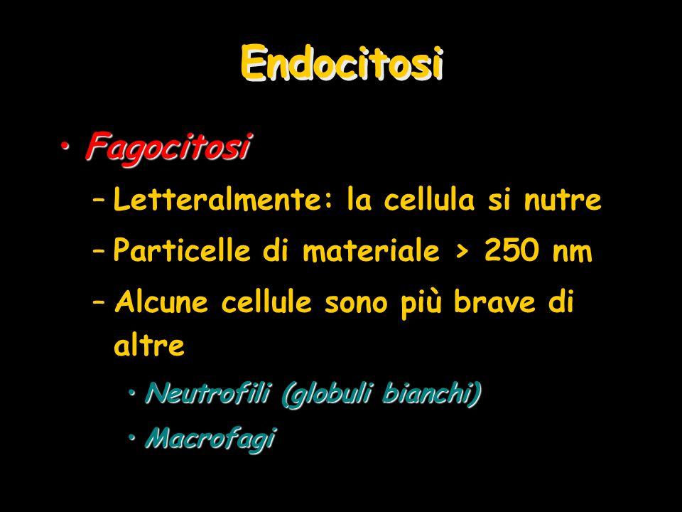 Endocitosi Fagocitosi Letteralmente: la cellula si nutre