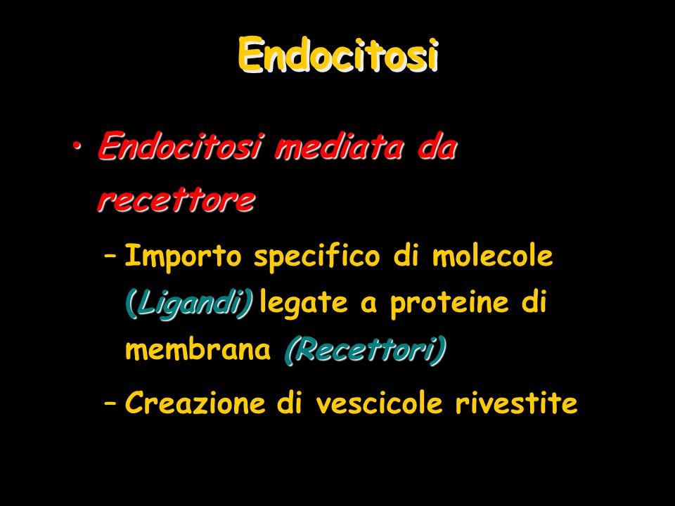 Endocitosi Endocitosi mediata da recettore