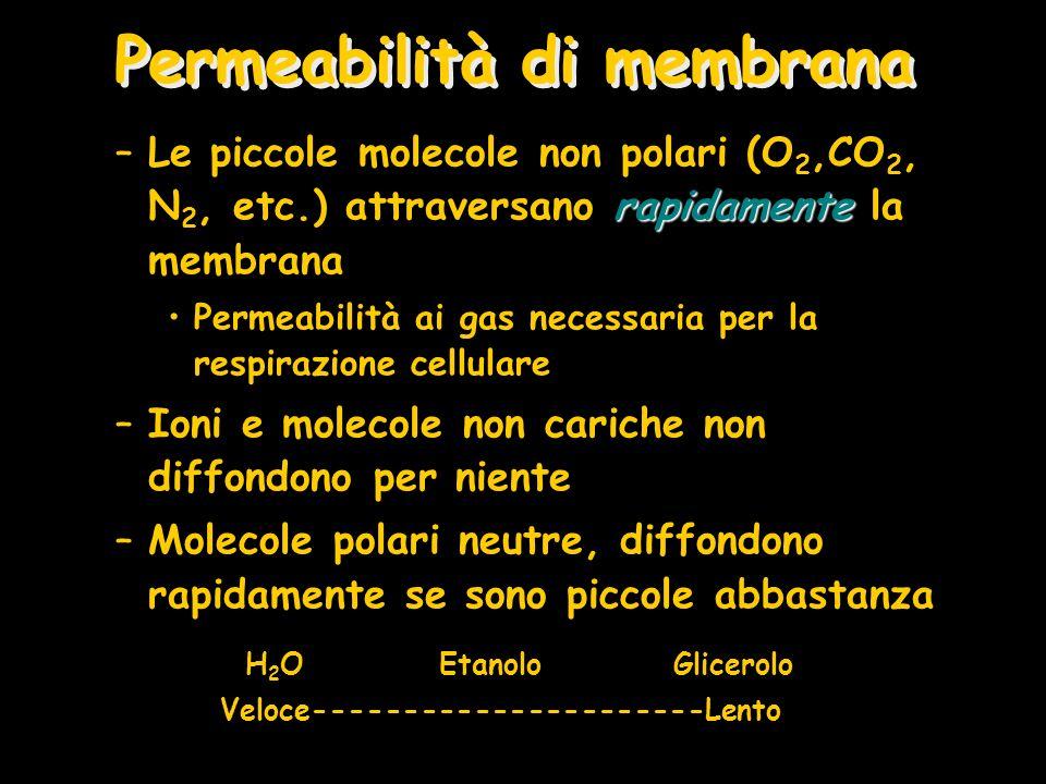 Permeabilità di membrana
