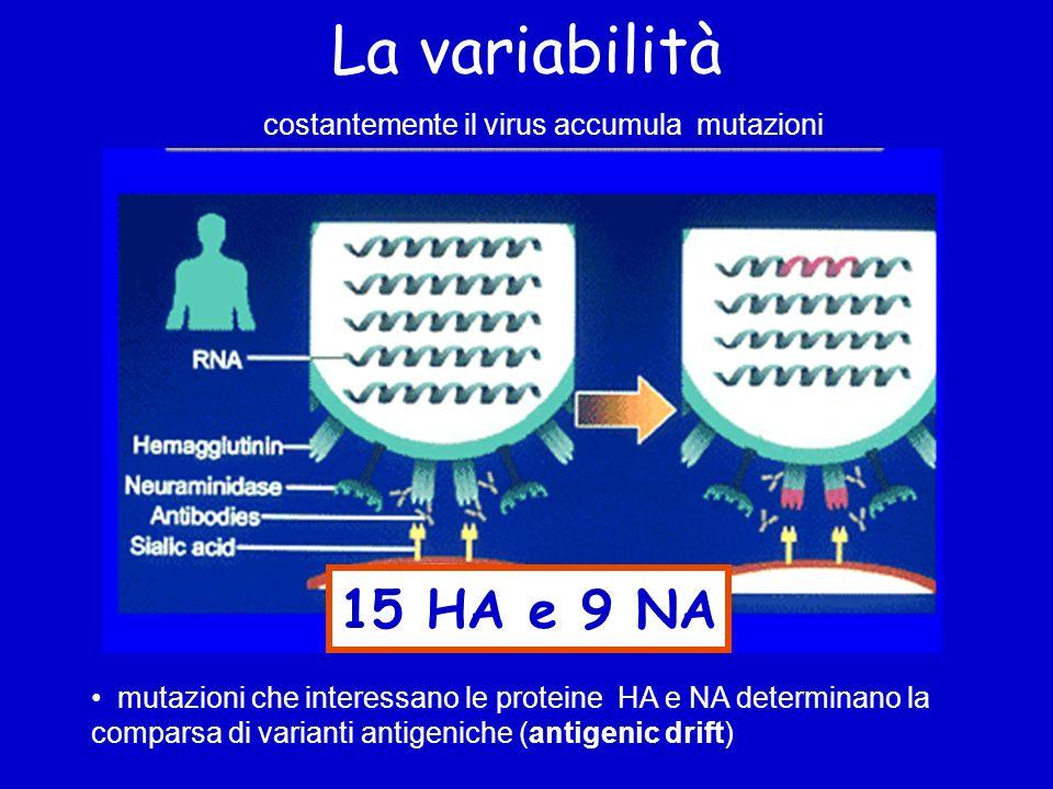 La variabilità 15 HA e 9 NA costantemente il virus accumula mutazioni