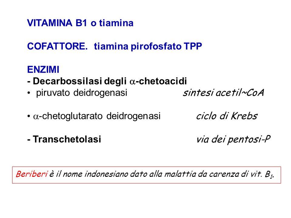 COFATTORE. tiamina pirofosfato TPP ENZIMI