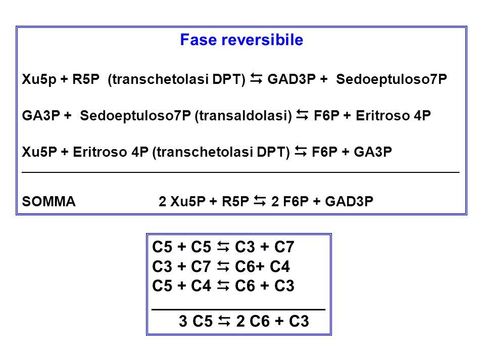 Fase reversibile C5 + C5  C3 + C7 C3 + C7  C6+ C4 C5 + C4  C6 + C3