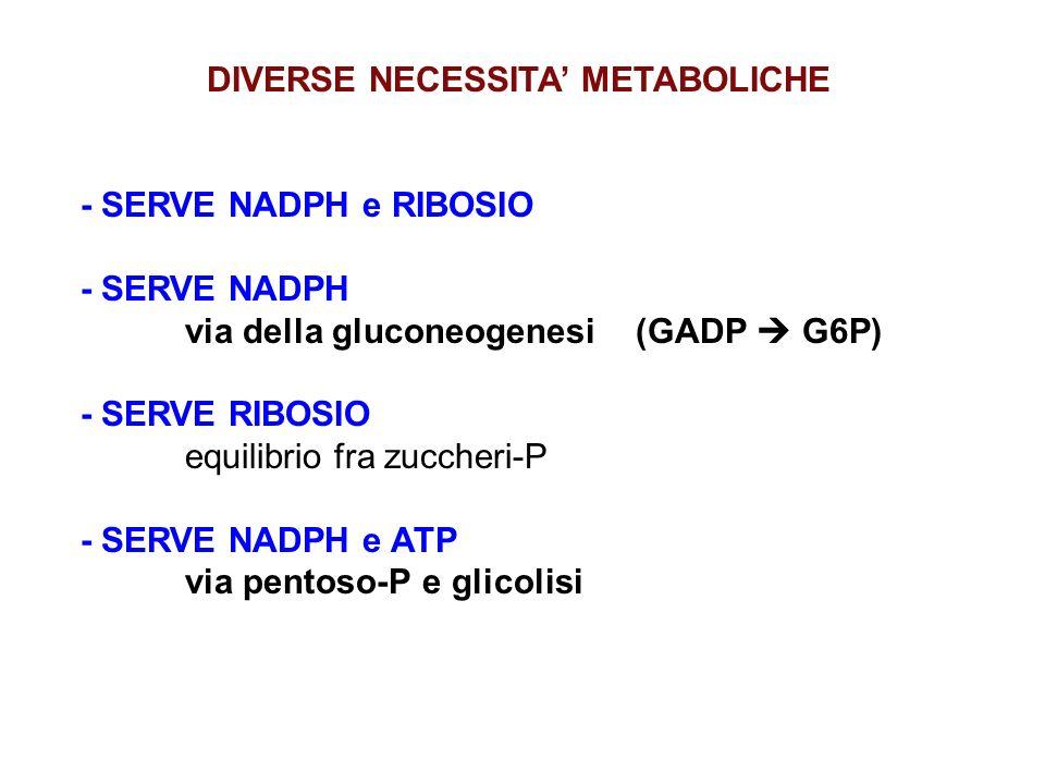 DIVERSE NECESSITA' METABOLICHE