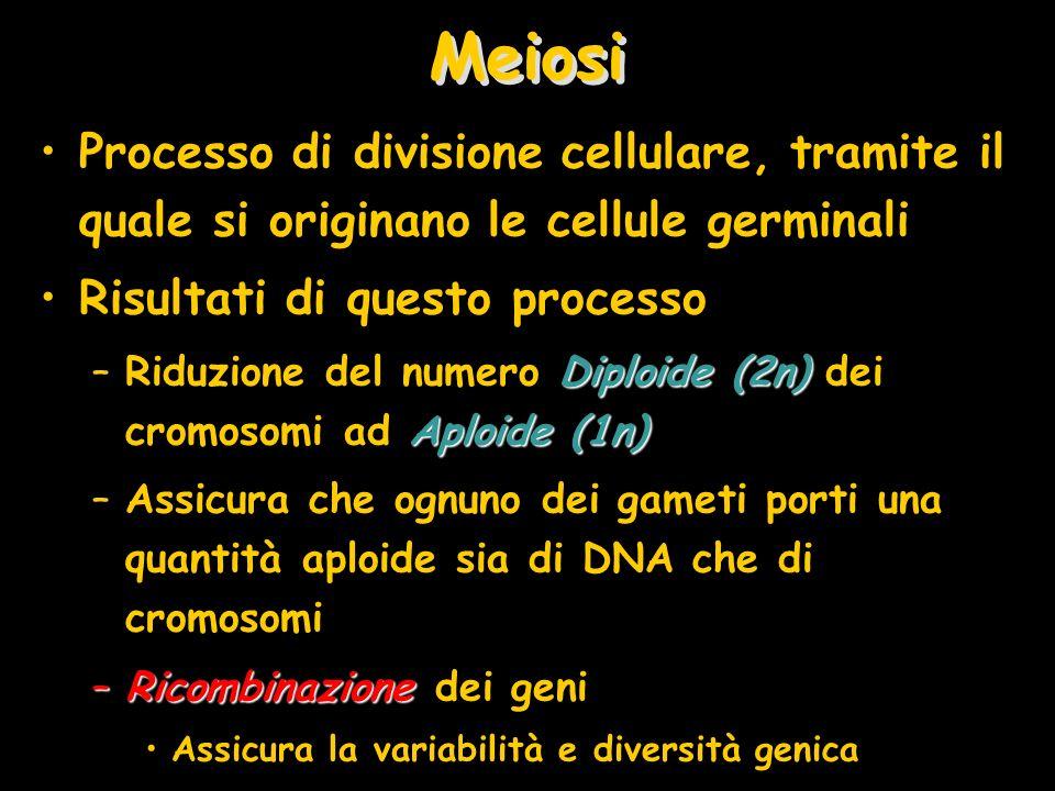 Meiosi Processo di divisione cellulare, tramite il quale si originano le cellule germinali. Risultati di questo processo.