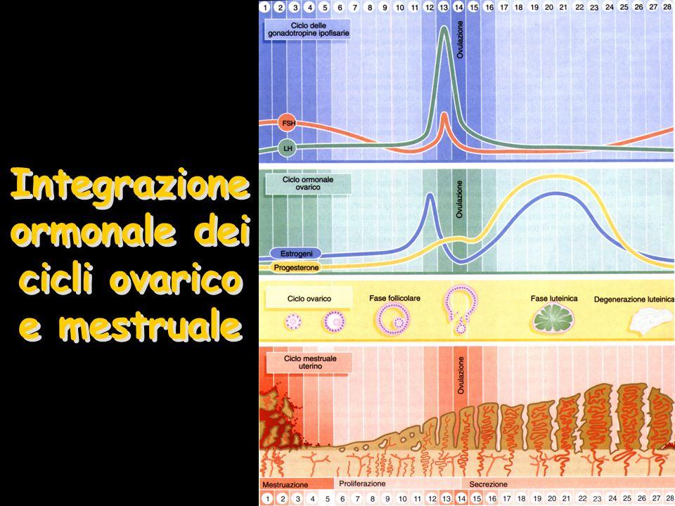 Integrazione ormonale dei cicli ovarico e mestruale