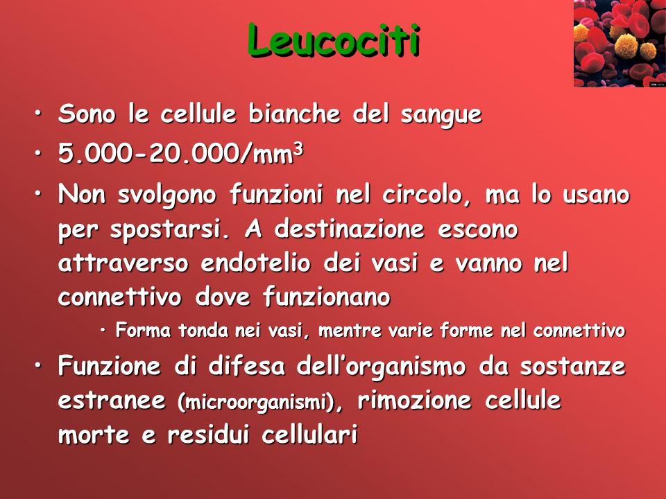Leucociti Sono le cellule bianche del sangue 5.000-20.000/mm3