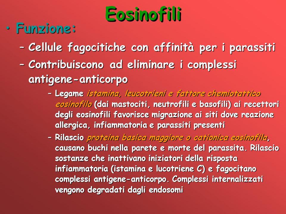 Eosinofili Funzione: Cellule fagocitiche con affinità per i parassiti