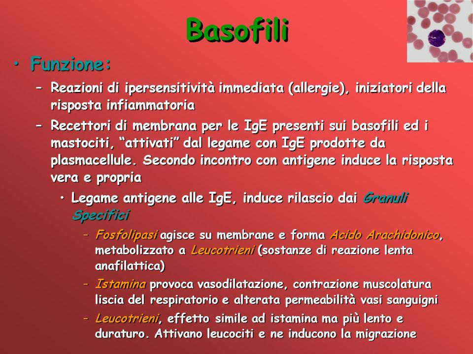 Basofili Funzione: Reazioni di ipersensitività immediata (allergie), iniziatori della risposta infiammatoria.