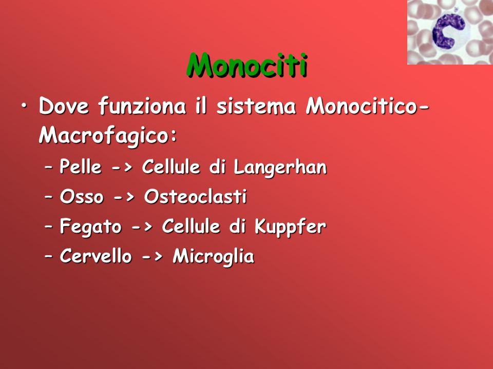 Monociti Dove funziona il sistema Monocitico-Macrofagico: