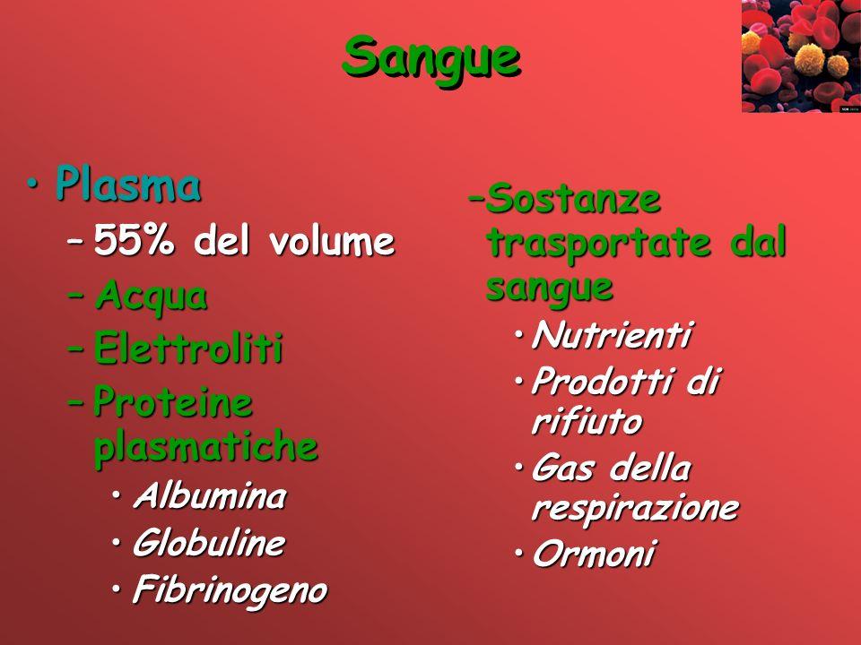 Sangue Plasma Sostanze trasportate dal sangue 55% del volume Acqua