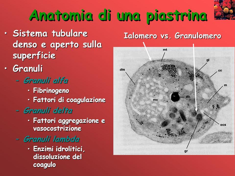 Anatomia di una piastrina