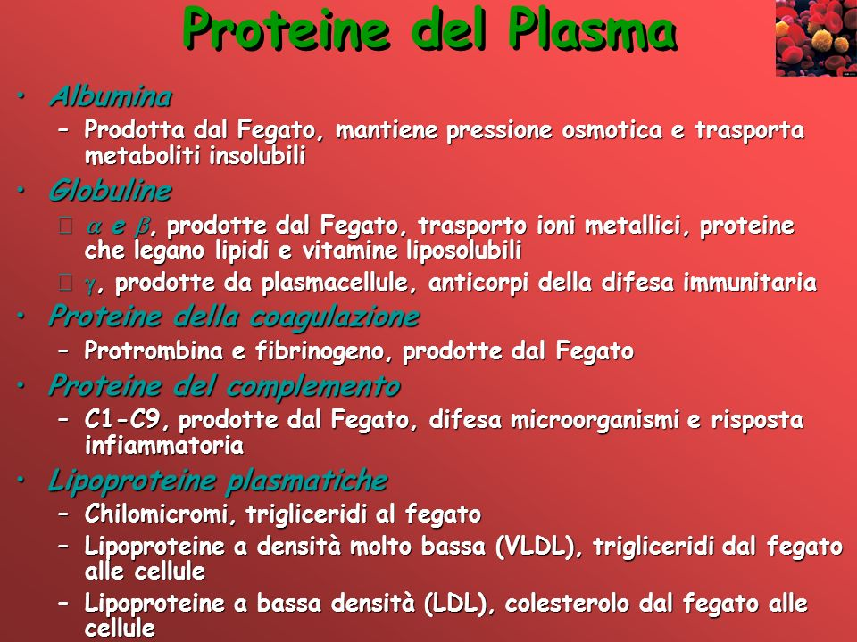 Proteine del Plasma Albumina Globuline Proteine della coagulazione