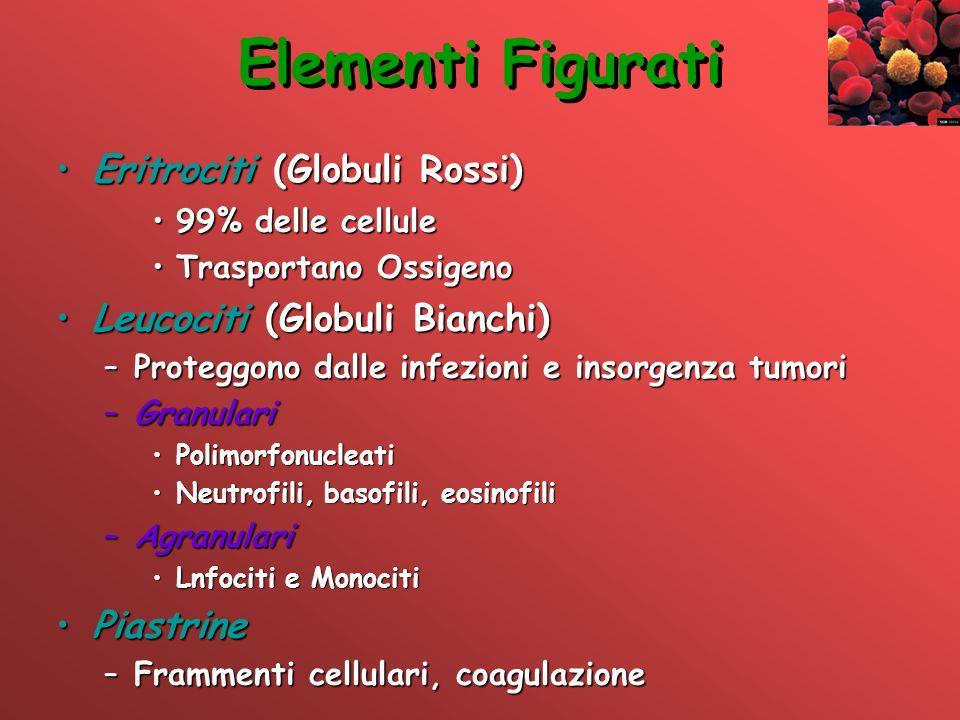 Elementi Figurati Eritrociti (Globuli Rossi)