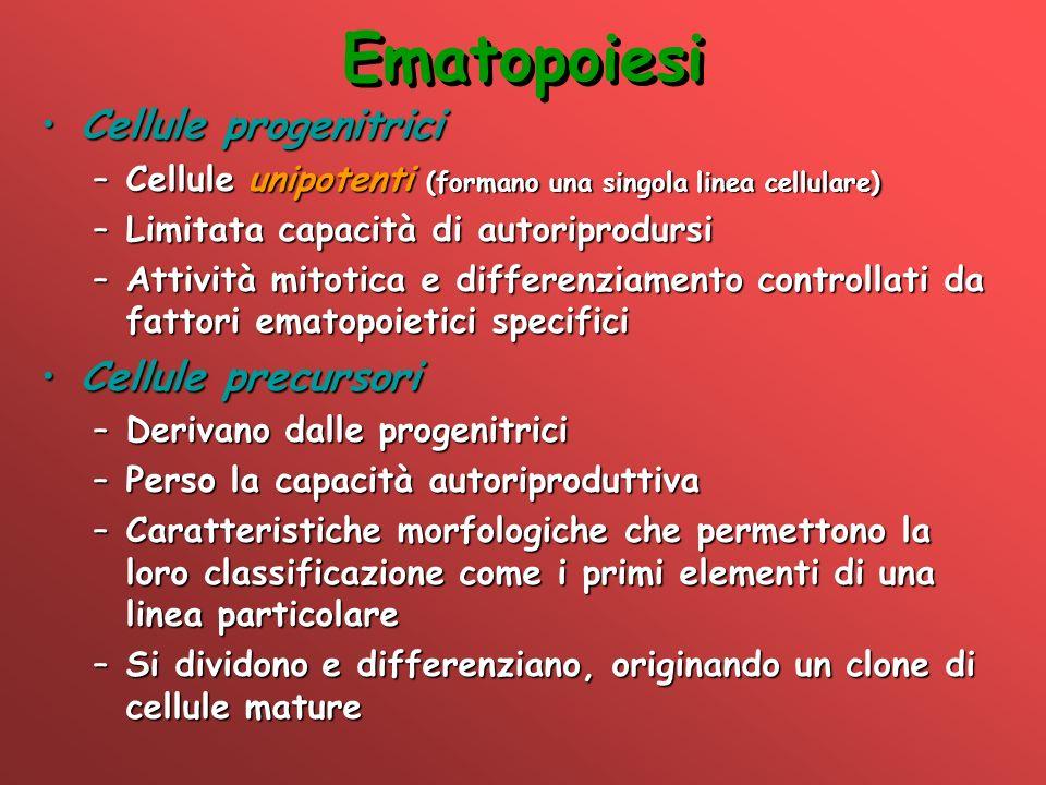 Ematopoiesi Cellule progenitrici Cellule precursori