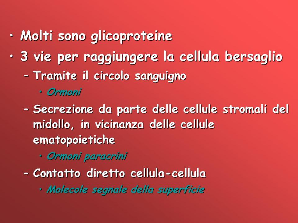 Molti sono glicoproteine 3 vie per raggiungere la cellula bersaglio